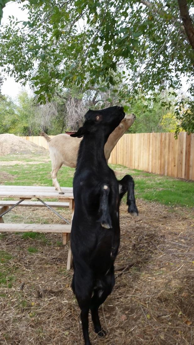 Idaho Farm Animal Sanctuary, Inc - Home